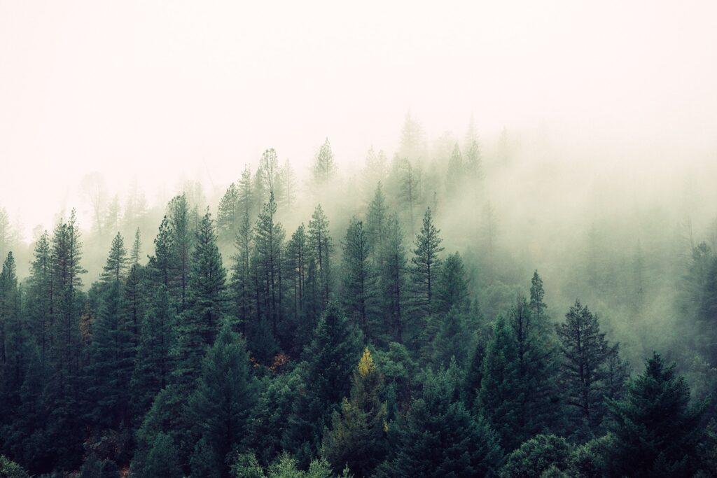 Sumuinen metsä.